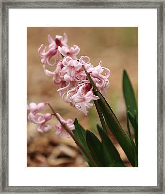 Pastel Flowers Framed Print by Coby Cooper