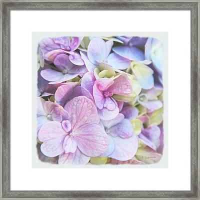 Framed Print featuring the photograph Pastel Hydrangeas - Square by Kerri Ligatich