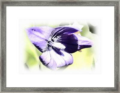 Pastel Iris Framed Print by Susan Leggett