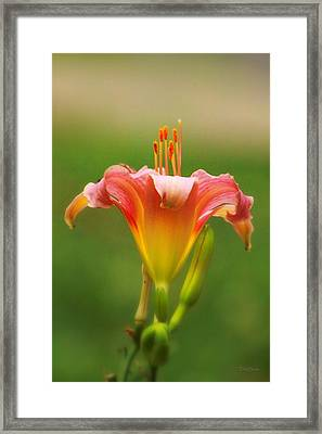 Pastel Lilyform Framed Print by Deborah  Crew-Johnson