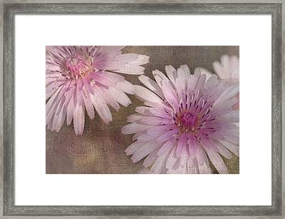 Pastel Pink Passion Framed Print by Benanne Stiens