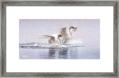 Pastel Swans Framed Print