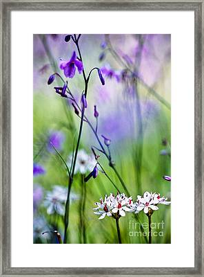 Pastel Wildflowers Framed Print by David Lade