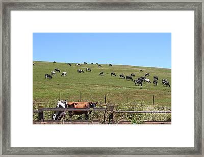 Pastoral Landscape Of Point Reyes California . 7d15962 Framed Print
