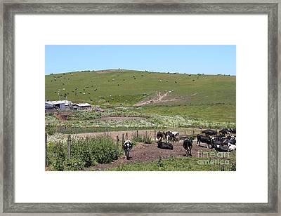 Pastoral Landscape Of Point Reyes California . 7d15964 Framed Print