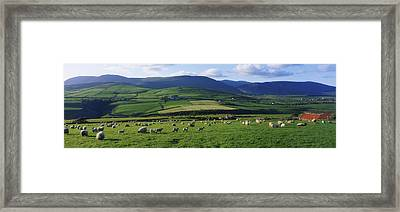 Pastoral Scene Near Anascual, Dingle Framed Print by The Irish Image Collection