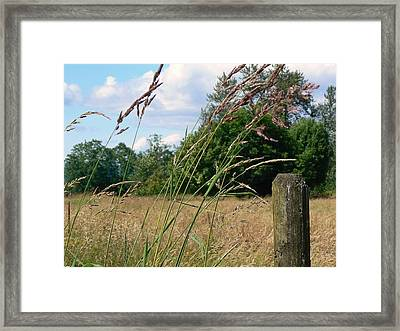 Framed Print featuring the photograph Pasture Grass by Pamela Patch