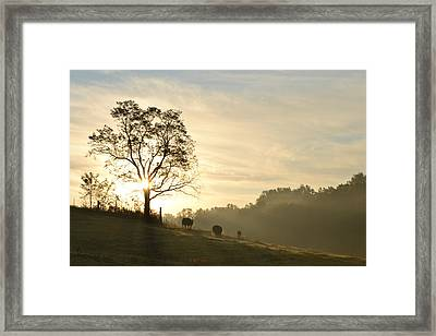 Pasture Sunrise Framed Print by JD Grimes