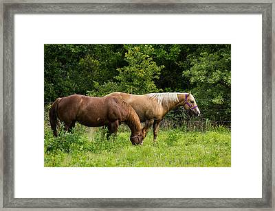 Pasture Time Framed Print by Doug Long