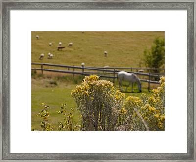 Pastures Framed Print