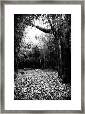 Patch Of Light Framed Print by John Rizzuto