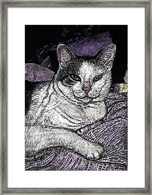 Patches The Cat Framed Print by Robert Goudreau