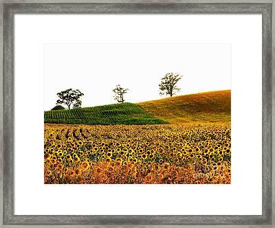 Patchwork Fields Framed Print