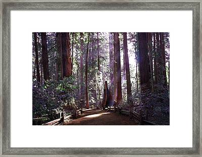 Path By An Ancient Redwood Framed Print by Laura Iverson