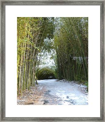 Path In Bamboo Field Framed Print by Renee Trenholm