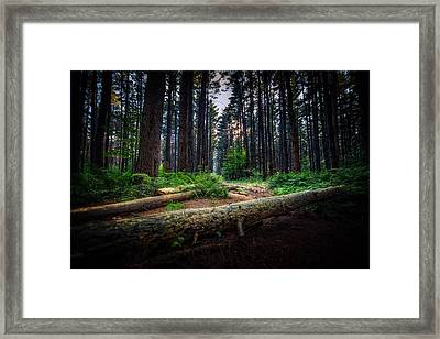 Path In The Pines Framed Print
