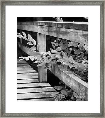 Path Interrupted Framed Print