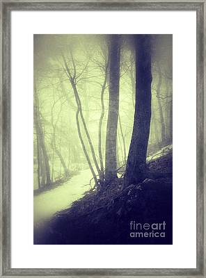 Path Through Misty Snowy Woods Framed Print by Jill Battaglia