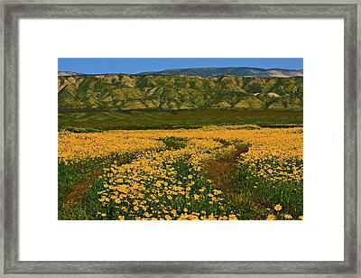 Path Through The Wildflowers Framed Print