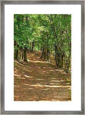 Path To Ciucaru Mare Peak Framed Print by Gabriela Insuratelu
