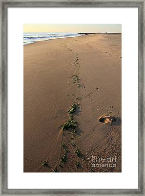 Path To Eden Framed Print by Everett Houser