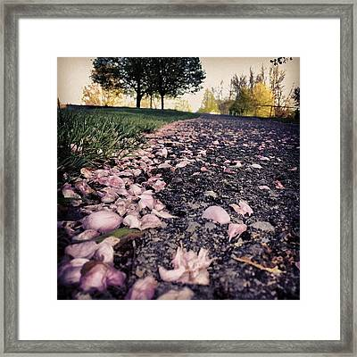 Path To Heaven II #flowers #petals Framed Print