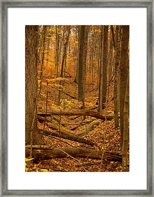 Path To The River Framed Print by Ed Smith