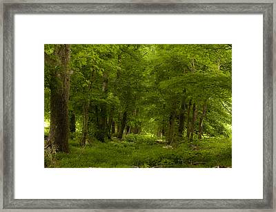 Path To Yesteryear Framed Print by Andrew Soundarajan