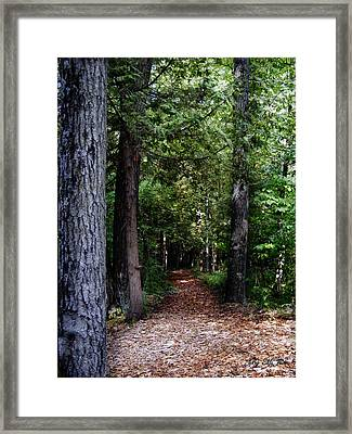 Pathway Framed Print by Ms Judi