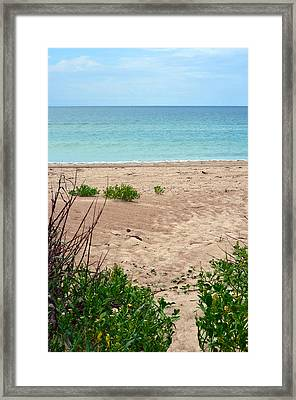 Pathway To The Beach Framed Print by Sandi OReilly