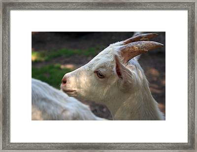 Framed Print featuring the photograph Patience Is A Virtue by Kay Novy
