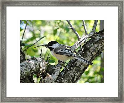 Patience On Tuesday Framed Print by Katie Bauer