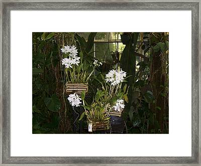 Framed Print featuring the photograph Patience by Sheila Silverstein