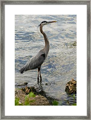 Patient Fisherman Framed Print