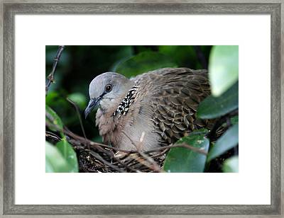 Patiently Nesting Mother Framed Print by Nabil Kannan