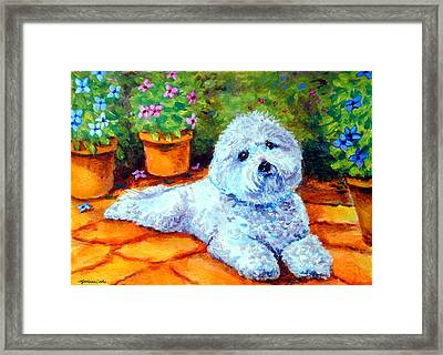 Patio Pal - Bichon Frise Framed Print by Lyn Cook