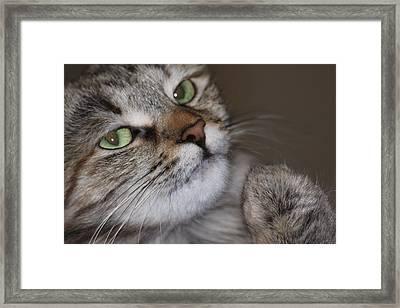 Patsy Pita Framed Print