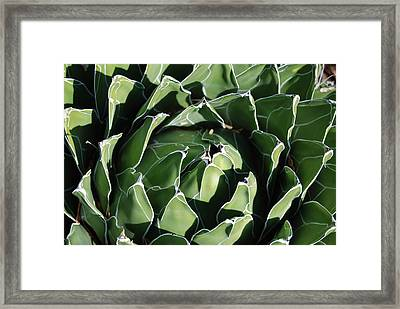 Patterns In Green Framed Print