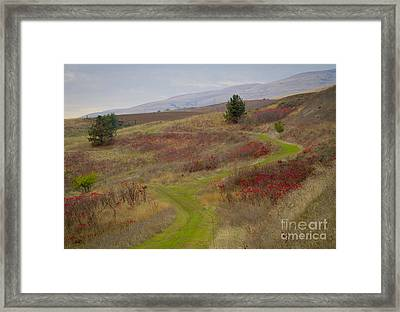 Paved In Green Framed Print by Idaho Scenic Images Linda Lantzy