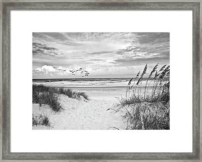 Pawleys Island - Pelican Flyway Framed Print