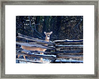 Framed Print featuring the photograph Pea Ridge Battlefield Deer by Nava Thompson