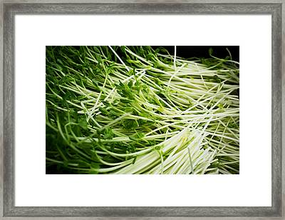 Pea Sprouts Framed Print by Tanya Harrison