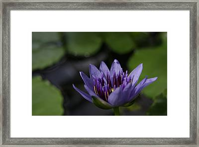 Peace And Love Framed Print by Jen Baptist