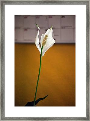 Framed Print featuring the photograph Peace In Time by Amee Cave