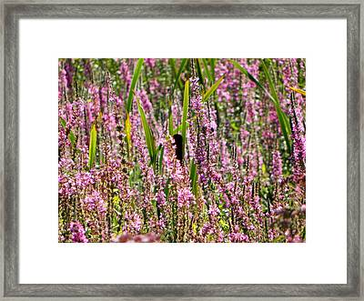 Peace Framed Print by Jennifer Compton