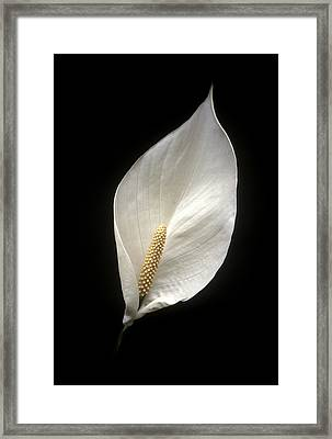 Peace Lily Framed Print by Miguel Capelo