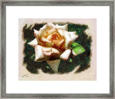 Peace Rose Framed Print by Arne Hansen