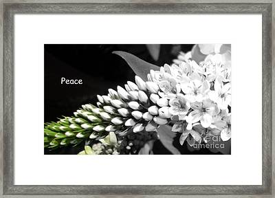 Peace Framed Print by Sian Lindemann