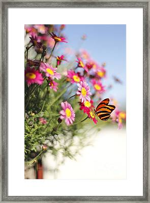 Peaceful Feeling Framed Print