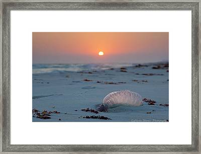 Framed Print featuring the photograph Peaceful Man Of War by Charles Warren